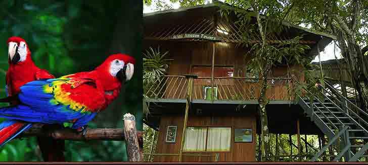 Manaus-brazil-hotel-home-top