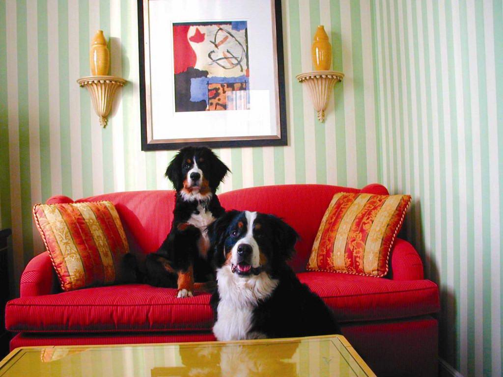 best pet friendly hotels eccentric hotels. Black Bedroom Furniture Sets. Home Design Ideas